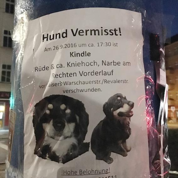 Oh Schreck, Oh Schreck, Der Hund Ist Weg!